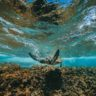 4 Scuba Diving Spots In Kauai Hawaii